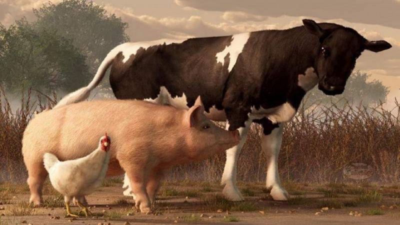 ФЗ о крестьянском фермерском хозяйстве