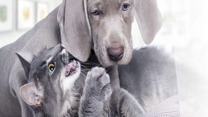 производство кормов для кошек и собак