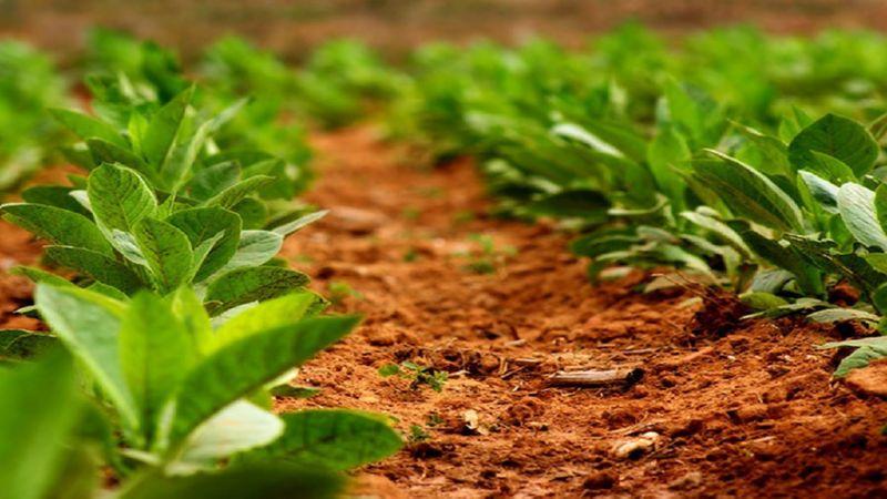 бизнес-план выращивание табака