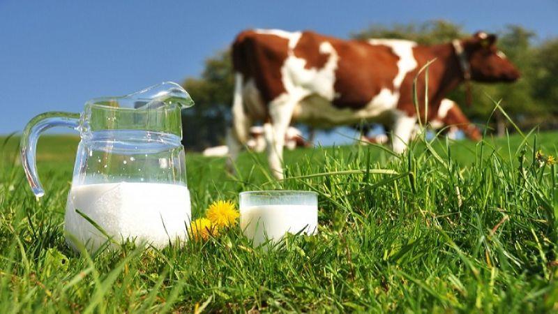 мини молокозавод