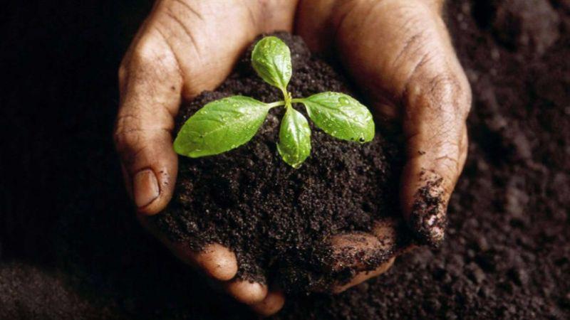 пример бизнес-плана для сельского хозяйства