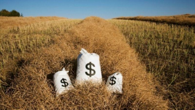 сельхоз бизнес