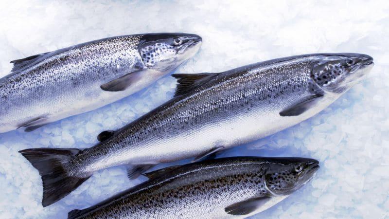 бизнес-план рыбного хозяйства