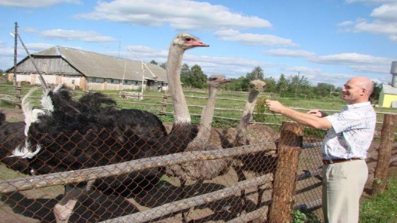 с чего начать страусиный бизнес